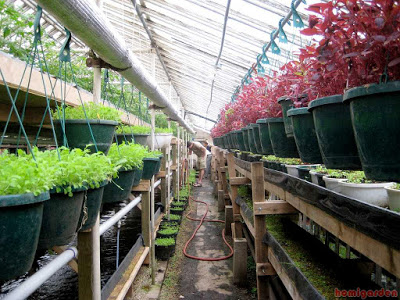 the aquaponic gardening method