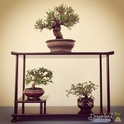 The mini bonsai tree