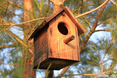 IMG Finding What Materials For Your Wooden Bird House - Tips To Help on How to Make a Wooden Birdhouse