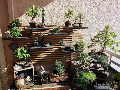 Where To Look For Bonsai Plants For Sale