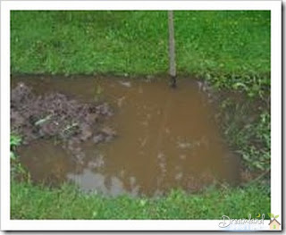 image - Clay soil does not drain well