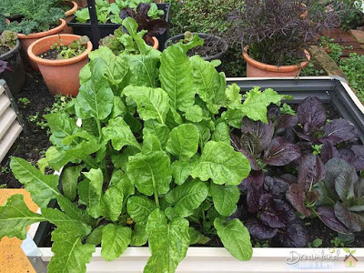 Maintaining an organic garden can be fun and satisfying