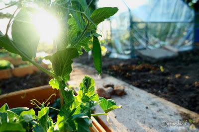 Smart vegetable gardening ideas for people with limited for Limited space gardening ideas