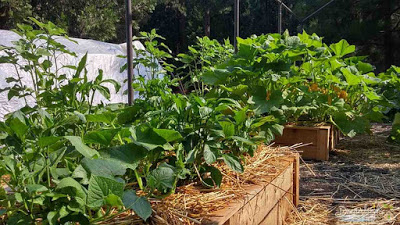 Make your garden plot ready for planting