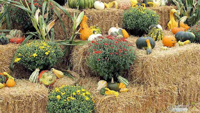 Image of How to Grow Pumpkins Successfully