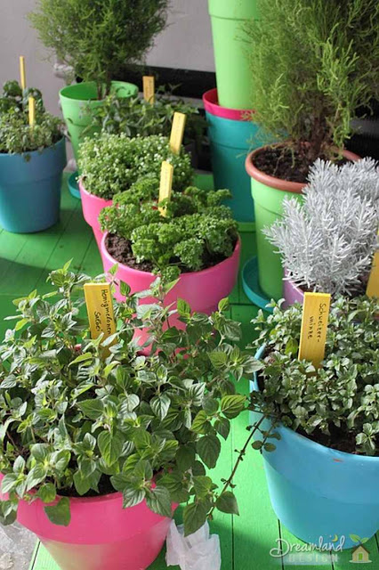 potted herb garden