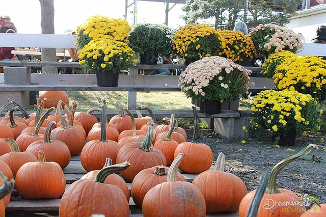Fall Season Container Gardening