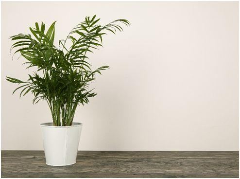 Flower Pot Design - Potted palms